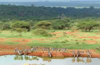 Zebra at Watering Hole in East Africa by W. Yurko Photo Contest 2017 Honourable Mention